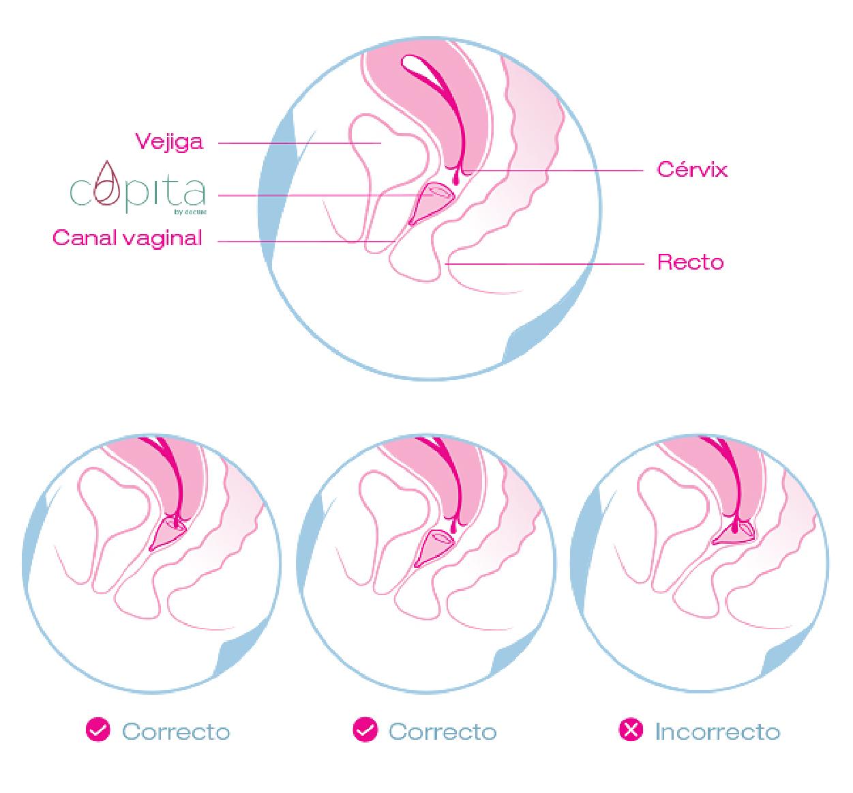 Cómo ponerse la copa menstrual