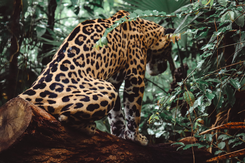 Zoológico de Belice